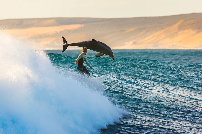 surfing-with-the-dolphins